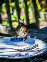 Bird on Plate Tresco  2017 (davidmcbridephotography) Tags: tresco gardens flowers sea water sunshine travel colour vivid squirrell succulents plants trees palms boating isles scilly scillies united kingdom holiday islands scenic walking outdoors trecking rambling birds flower