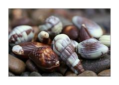 Chocolate Shells On The Beach (paulinecurrey) Tags: smile smileonsaturday chocolate contrast macro outside pebbles shellchocolates shell whitechocolate milkchocolate blur bokeh detail art creative unusual texture pattern