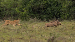 unbenannt-1299 (ovg2012) Tags: kenyake nairobi nairobinationalpark