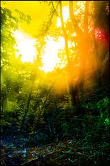 20170605-069 (sulamith.sallmann) Tags: landschaft natur blur bunt bäume colorful effect effekt filter folientechnik forest landscape nature trees unscharf wald brandenburg deutschland deu sulamithsallmann