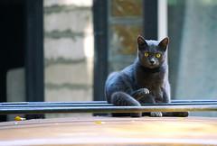 strange cat (photoksenia) Tags: cat street odessa ukraine