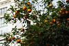 Appelsinar