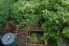 Looking Down on the Front Garden - May 2017 (basswulf) Tags: frontgarden compost compostbin d40 1855mmf3556g lenstagged unmodified 32 image:ratio=32 permissions:licence=c 20170519 201705 3008x2000 garden normcres oxford england uk