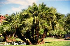 Scan_0029.jpg (Les_Stockton) Tags: canoscan8800f canon film neworleans louisiana unitedstates us