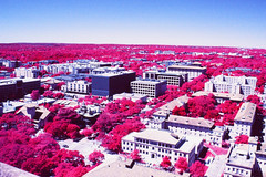 CMB (infobong) Tags: infrared colorinfrared infraredfilm colorinfraredfilm austin utexas