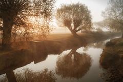 A Walk in the Park II (jonron239) Tags: london richmondpark beverleybrook tree stream drain reflection mist sunshine