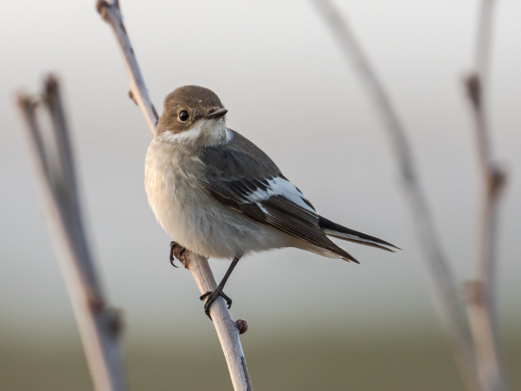 The world 39 s best photos of oiseau and thau flickr hive mind for Oiseau france