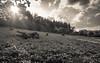 Tierpark 10 (FSR Photography) Tags: sw schwarzweis schwarzweiss monochrome monochrom tierpark clouds wolken haus himmel sky canon canon400d canondslr sun sonne sonnenstrahlen sonnenuntergang sunbeams bw blackandwhite blackwhite bäume trees travel reisefotografie reise fsr fsrphotography