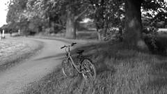 early summer evening light 7 (Amselchen) Tags: mono blackandwhite bw bokeh bokehpanorama blur dof depthoffield bike bicycle field season earlysummer sony alpha7 samyang 85mmf14