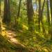 Stokes Falls Trail - The Beggar's Glenn