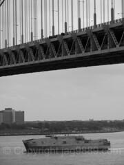 2017 Fleet Week - USNS Yuma (EPF 8)  Expeditionary Fast Transport Vessel passing the Verrazano-Narrows Bridge, New York City (jag9889) Tags: 2017 2017fleetweek 2017fleetweeknewyork 20170524 bw blackandwhite boat brooklyn celebration fleetweek forthamilton fortwadsworth k200 kingscounty monochrome ny nyc newyork newyorkcity outdoor parade paradeofships richmondcounty river seaservices ship southbrooklyn statenisland thenarrows uscoastguard usmarines usnavy usa unitedstates unitedstatesofamerica uppernewyorkbay verrazanonarrowsbridge vessel warship water waterway jag9889
