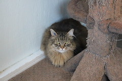 Timmie - 9 year old spayed female