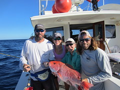 Research team with tagged red snapper (FWC Research) Tags: lutjanuscampechanus redsnapper snapper fish marinefish acoustictelemetry research gulfofmexico florida fwc fwcresearch work