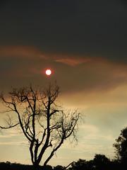 Crimson sun (LeelooDallas) Tags: western australia bannister landscape sunset eucalyptus sun tree bush sky cloud dana iwachow nikon s9200