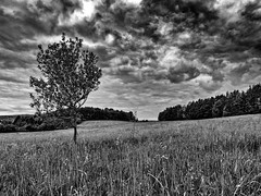 Bad day mood (Petr Horak) Tags: grass olympus foliage cloudy meadow rural czechia clouds countryside penf bohemia monochrome overcast forest grassland sky blackandwhite nature black landscape cloud bw