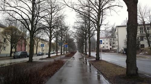 2017-03-17 Koskelantie trees