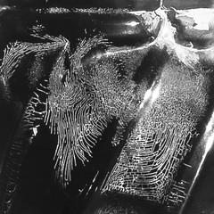 darkroom exploration II (teosolar) Tags: darkroom dunkelkammer photography beauty error fingerprint bad destroyed bottle film negative germs bacteria expired