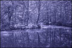 A nice Place to relax (HikerandBiker) Tags: a99ii baum forest ilca99m2 leepolarizer outdoor reflection reflexion sony sonya99ii sonyalpha99ii sonysal2470mmf28zassmii spiegelung sumpf swamps tree wald walk wasser water mirror wandern