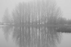 soul companions (Mindaugas Buivydas) Tags: lietuva lithuania bw fog mist morning tree trees november autumn fall mood moody mindaugasbuivydas