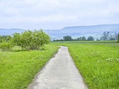 Auenlandschaft Hohenrode-Mai (43)