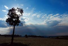 Beams and smoke (LeelooDallas) Tags: western australia bannister landscape tree eucalyptus field farm bush sky cloud dana iwachow nikon s9200