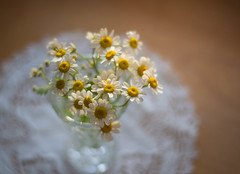 FaNcifUL (Captured Heart) Tags: chamomile chamomileflowers fanciful lace cheerful
