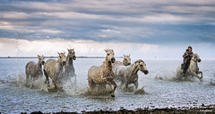 It starts to rain (Antoni Figueras) Tags: horses whitehorses camargue sea marshes clouds rain rancher france