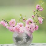 Flower greeting thumbnail