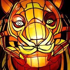 Look me in the eyes, baby! (Katisi) Tags: canoneos550d autofocus macro lens eyes yellow orange tiger face portrait glowing light festival sydney vivid vivid2017 mysterious night black dark nightphotography australia tarongazoo zoo mesmerising faszinating happy animal lampinon lightart
