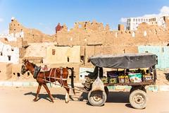 Hard work (dominiquesainthilaire) Tags: nikon nikond80 egypte egypt desert whitedesert oasis bahariya horse cart vendor clay walls argile cheval charrette vendeur citrons lemons worldtrekker