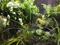 (eyair) Tags: ashmashashmash uk london england dulwich hornimanmuseum aquarium