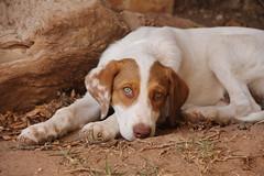 bailey (finnawi) Tags: dog photoraphy