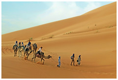 NOT 'Here In Vancouver' (HereInVancouver) Tags: camels dune sand desert sahara morocco riders tourists candid