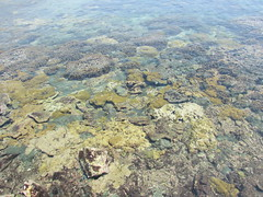 IMG_1793 (Natalia Sosa M.) Tags: playa beach sea oceano isla venezuela musgo moss algas texture