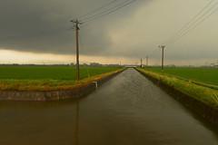 It was raining. (Yasuyuki Oomagari) Tags: canal rain cloud field rice windy nikon nikkor 24mmf14g rainy green pole