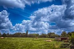 Wolken over Lovendegem (Jan 1147) Tags: natuur nature landschap landscape wolken wolk wolkendek sky lucht cloud clouds blue green blauw groen gras weide bomen trees koeien caws outdoor buitenopname lovendegem belgium platinumheartaward