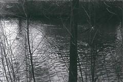 Hladina (_anavra) Tags: bw baw bwphotography 35mm analog analogue blackandwhite monochrome nature fomapan zorki zorki1 filmisnotdead melancholy river contrast