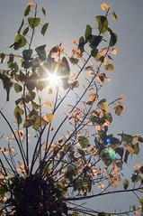 nEO_IMG_DSC03321 (Bryan Shan@) Tags: sony a55 sonya55 tamron tamronsp2448mmf3538 sp 2448mm f3538 model13a flower 花 plant 植物
