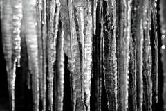 Black (and white) Ice 2 (PJ Swan) Tags: ice icicles cold frosty