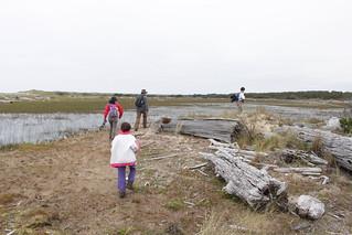 Walking through the marshes