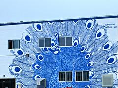 Peacock mural in Mount Pleasant (Ruth and Dave) Tags: mountpleasant vancouver peacock mural wall street blue bird art streetart publicart nickgregson