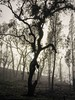 Sir Ivan Fire, February 2017 (photo: May 2017) (PhilipThompsonPhotography.com) Tags: australia blazeaid dunedoo glx lumix philthompson bushfire hdr 7xp sir ivan fire sirivanfire