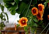 MAY FLOWERS, ACA PHOTO (alexanderrmarkovic) Tags: mayflowers acaphoto