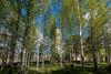 Varkaus Church spring 2017-4025 (Timo Heinonen) Tags: varkaus varkaudenkaupunki warkaus kevät easternfinland finland finnishlakeland