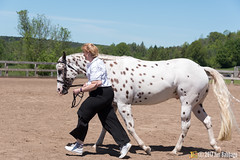 JBC_8465.jpg (Jim Babbage) Tags: krahc annualshow appaloosa horses