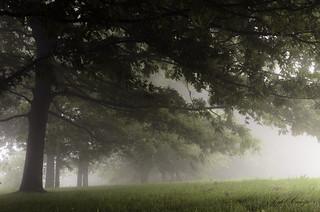 A ras de niebla