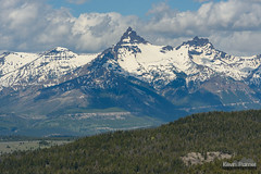 Distant Pilot (kevin-palmer) Tags: beartoothhighway beartoothmountains wyoming june summer spring snow snowy nikond750 nikon180mmf28 telephoto pilotpeak indexpeak sunny blue sky absarokamountains trees forest clouds