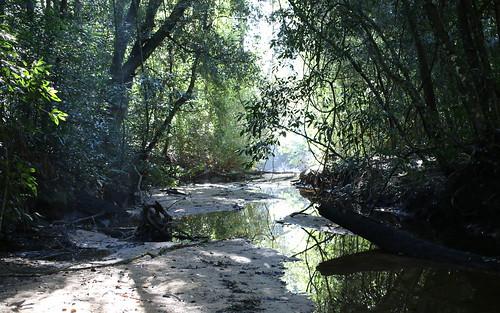 Smiths Creek, Ku-ring-gai Chase National Park