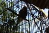 Gaiola (Mariporaii Fotografia) Tags: passaro gaiola céu sombra sol silhueta natureza nature natura iluminação ave