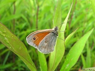 Butterfly 1325